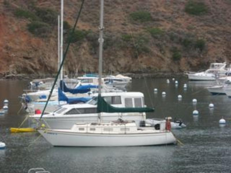 Pacific Dolphin 28